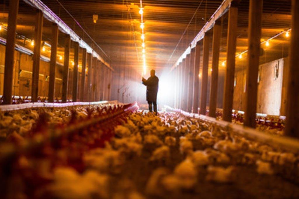 Нормативное регулирование утилизации трупов животных как обращения с биоотходами
