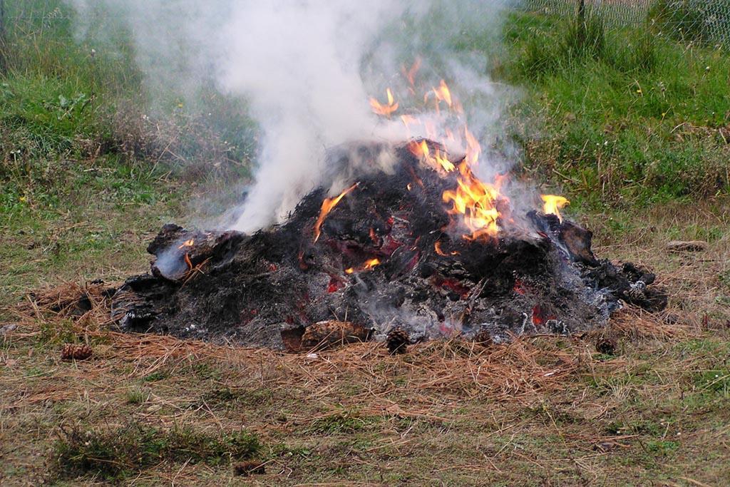 Сжигание отходов на участке