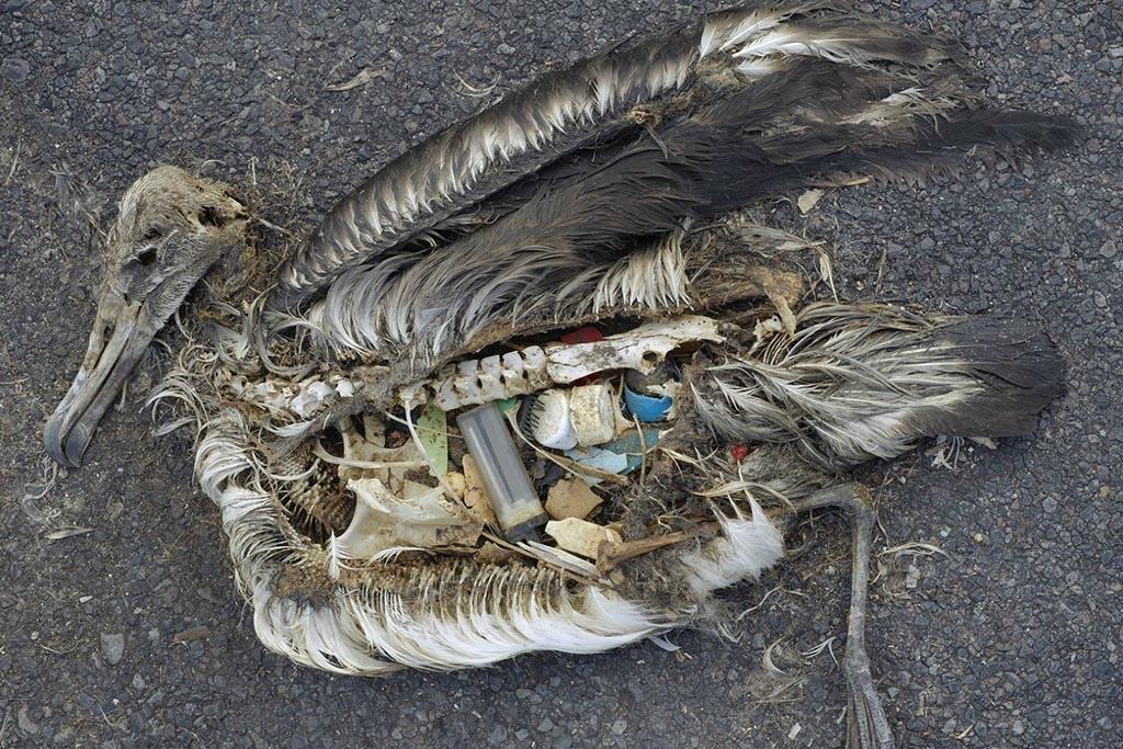 Катастрофический вред неорганизованных полимерных отходов