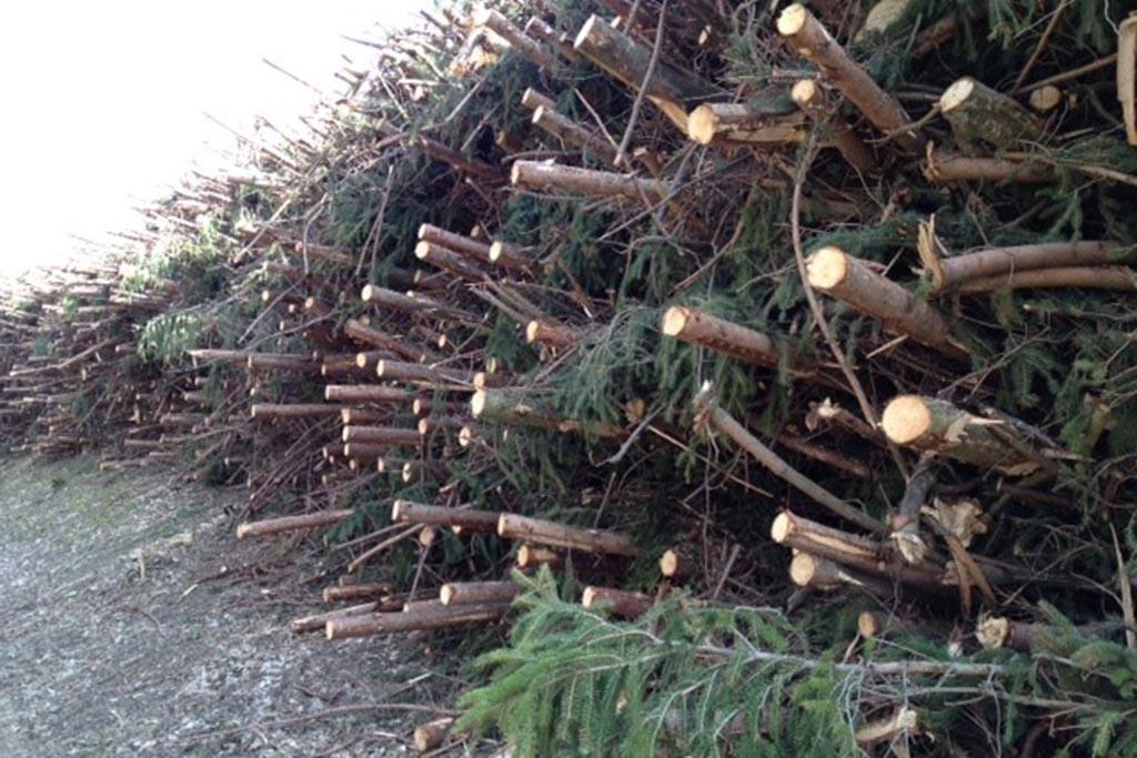 Обработка древесины как основной источник древесных отходов