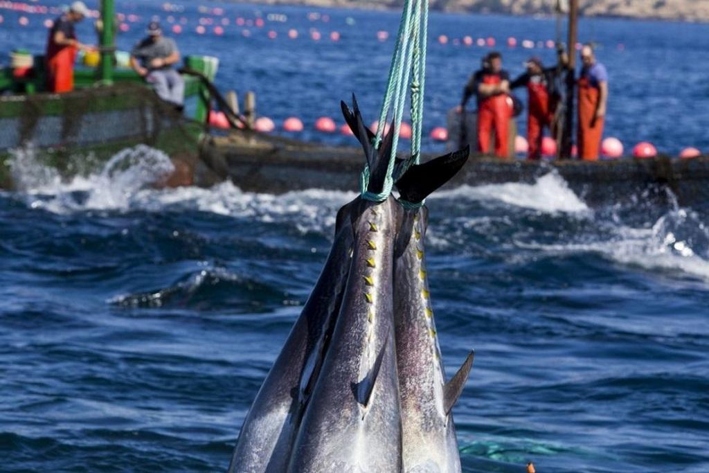 Утилизация рыбных отходов в других странах