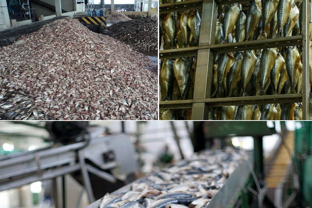 Классификация сырьевых ресурсов рыбы по агрегатному состоянию