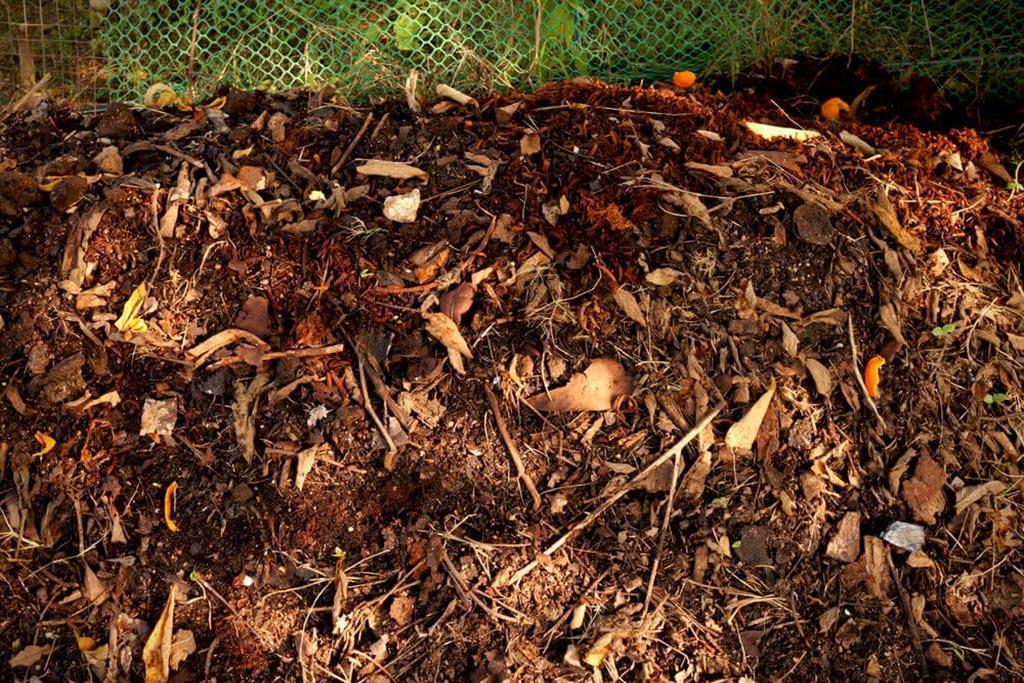 Плюсы и минусы жечь мусор на приусадебном участке