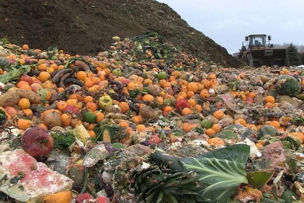 Проблемы рациональной переработки пищевого мусора
