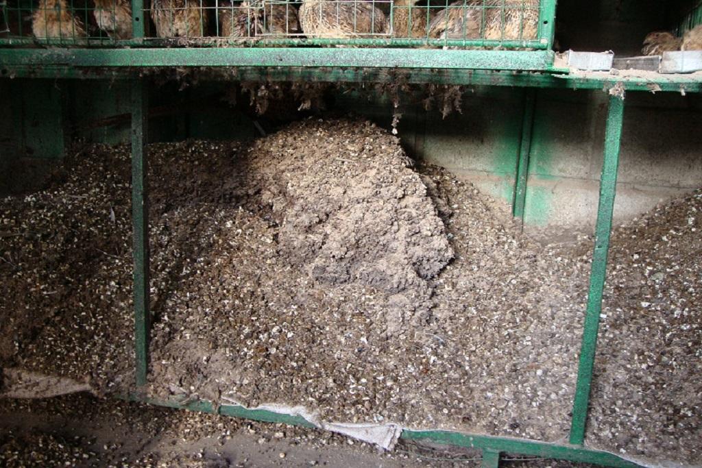 Утилизация куриного помета