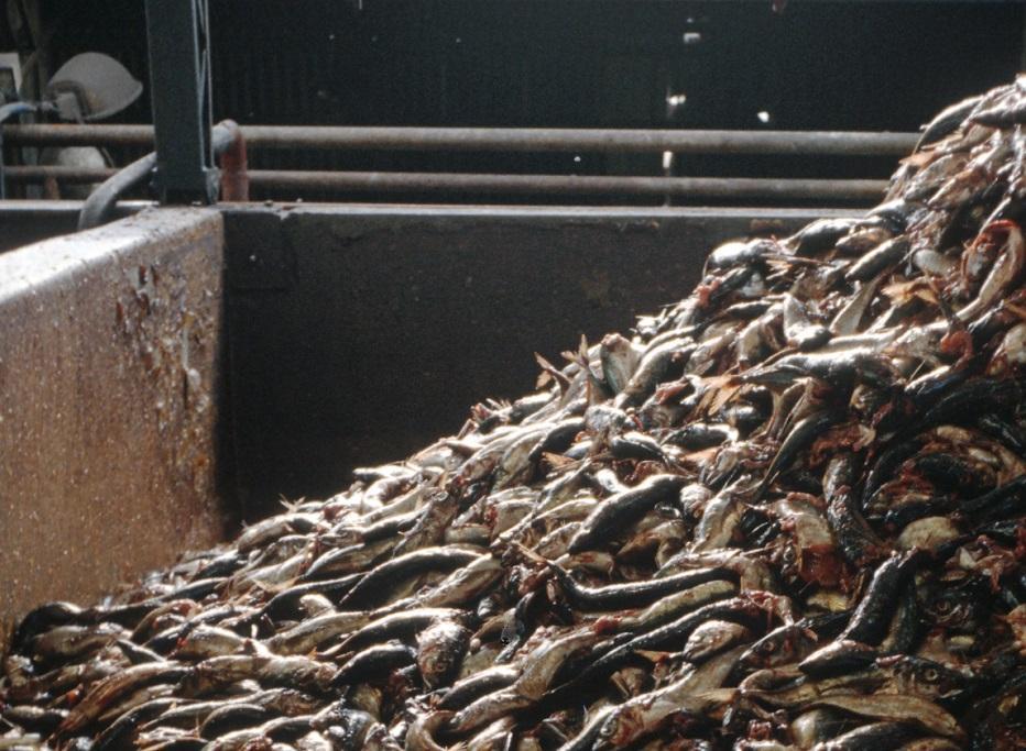 Утилизация рыбных отходов