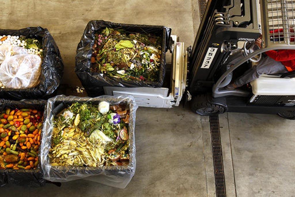 Виды пищевых отходов
