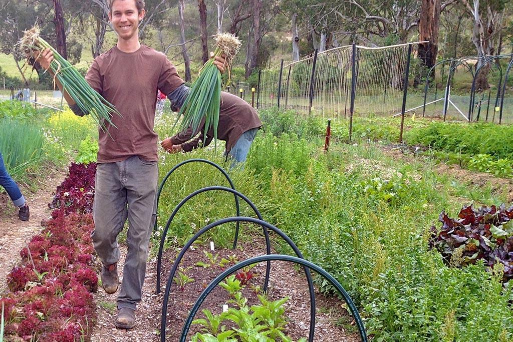 Выращивать продукты самостоятельно, если позволяют условия