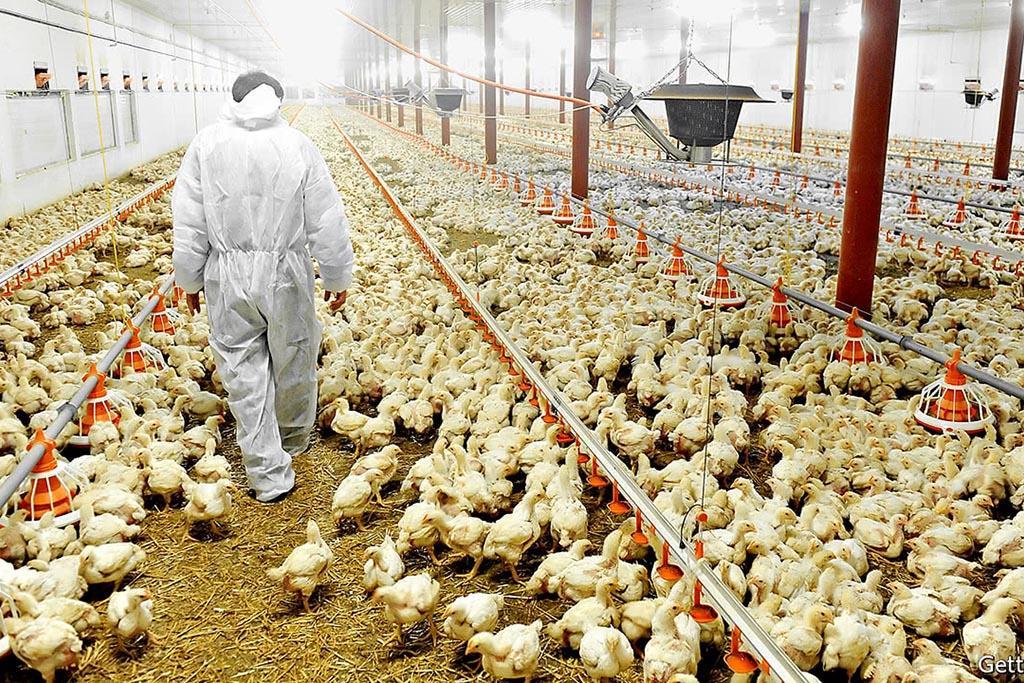 Контролирующие органы и действия в сфере обращения с отходами животноводства