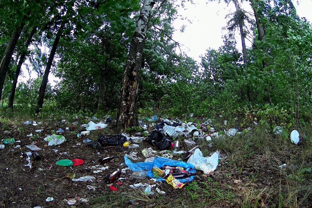 Куда пожаловаться на мусор в лесу