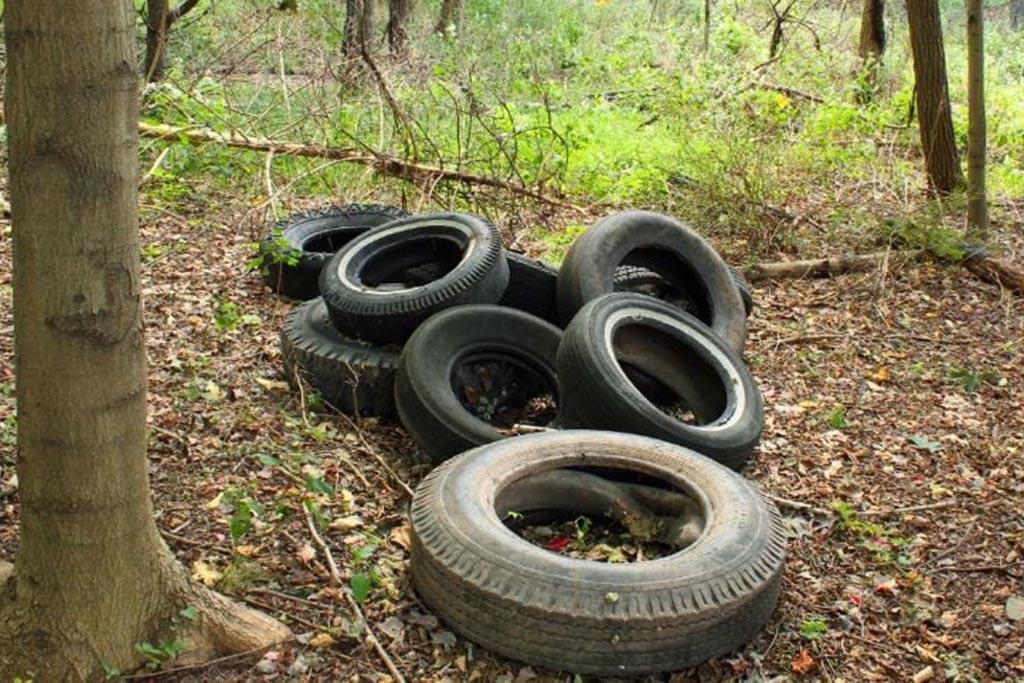Отработанные шины в лесополосе