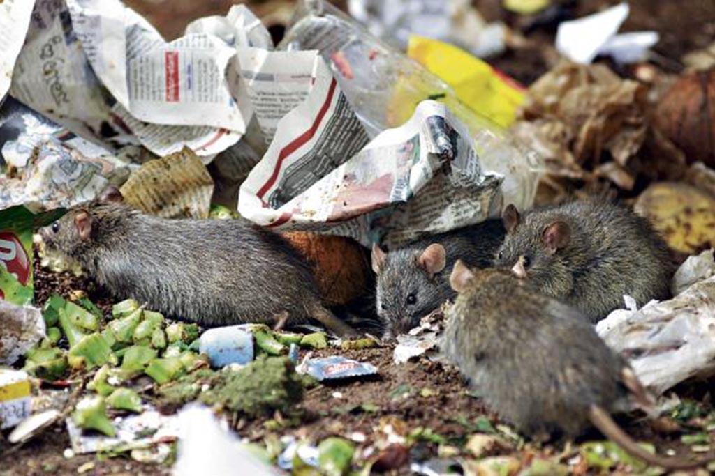 Переработка мусора, как важный этап обращения с отходами