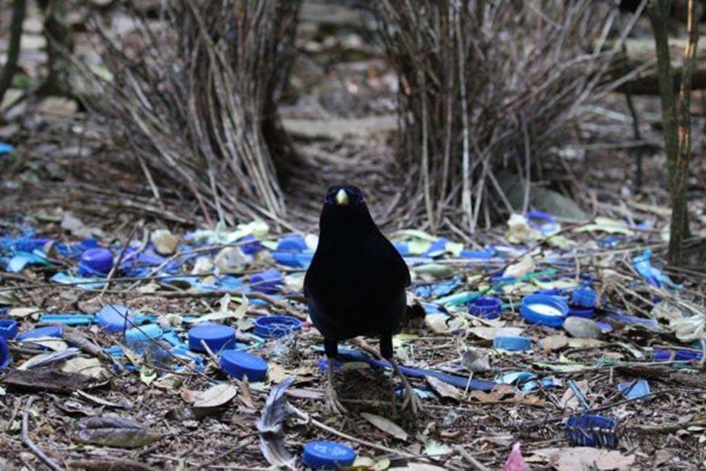 Пластиковые крышки разлагаются столетиями