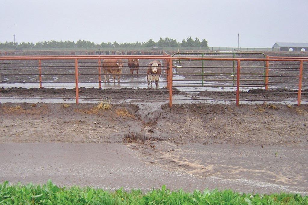 Вред отходов животноводческих комплексов и актуальность проблемы утилизации