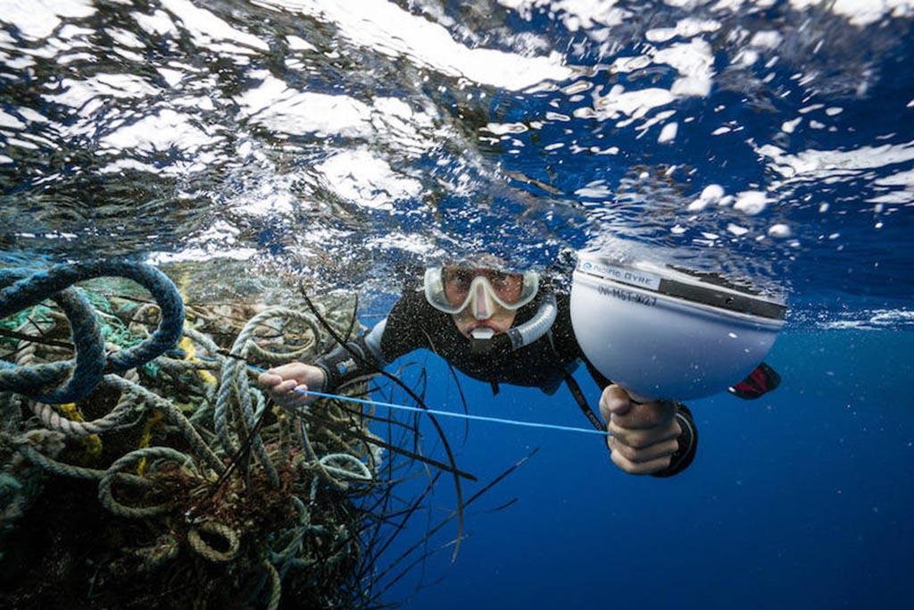 Почему экологи забили тревогу